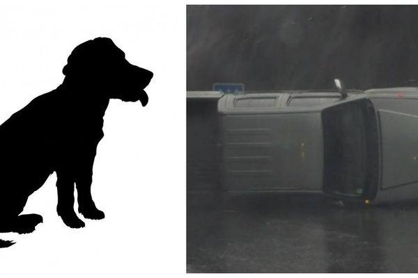 Un chien, la curiosité et la pluie à l'origine d'accidents sur la RDO