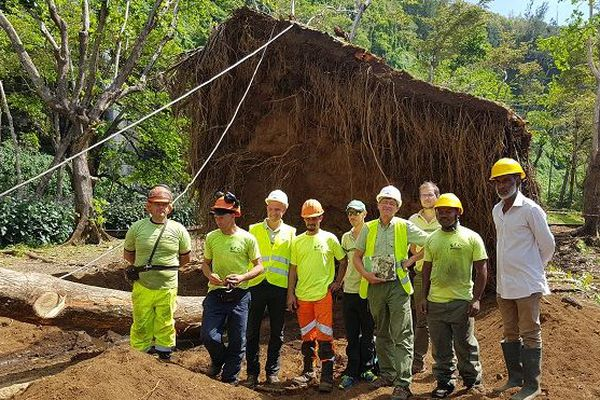 Les agents de l'ONF redressent le banian de l'Anse des Cascades.