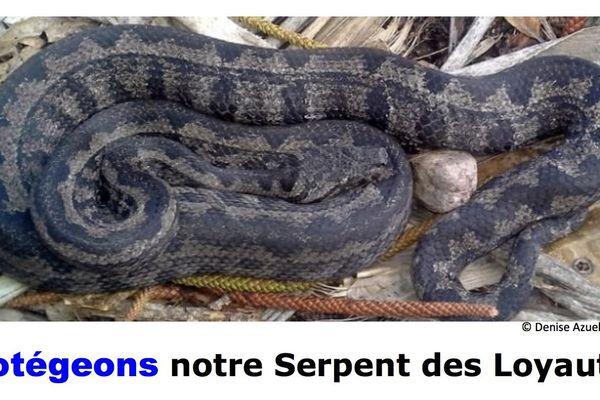 Appel à protéger le serpent des Loyauté, 18 juillet 2018
