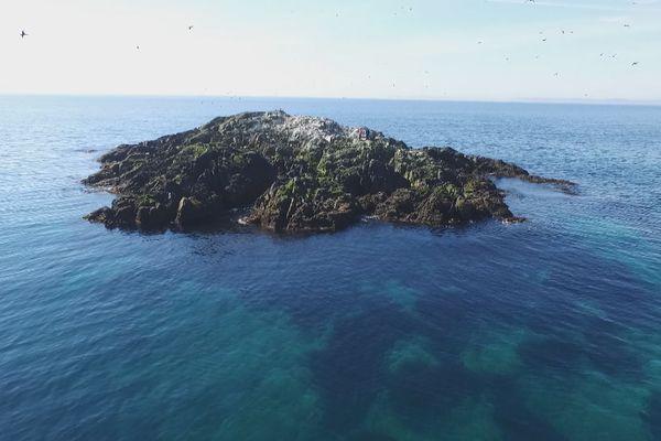 Un îlot de nidification des cormorans à aigrettes
