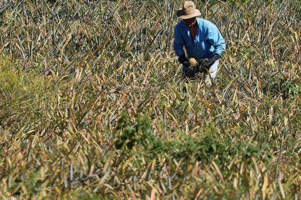 Un agriculteur de La Réunion (photo d'illustration).