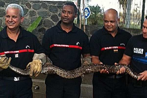 Sapeurs et python
