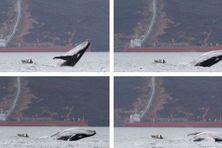En haut à gauche, l'image diffusée, encadrée par les clichés suivants.