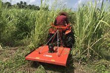 Les planteurs de canne investissent dans des outils de sarclage mécanique (ici un microtracteur équipé d'un girobroyeur).