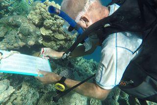 Environnement: mission de surveillance des coraux