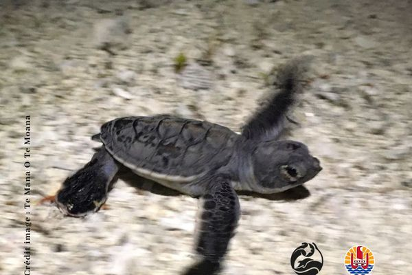 bébé tortue 2