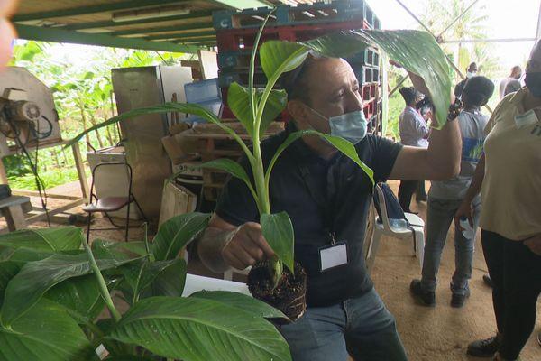 Atelier banane plantin 1