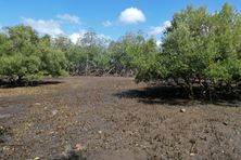 La mangrove de Poroani, dans la baie de Boueni au sud de Mayotte est la plus grande du département.