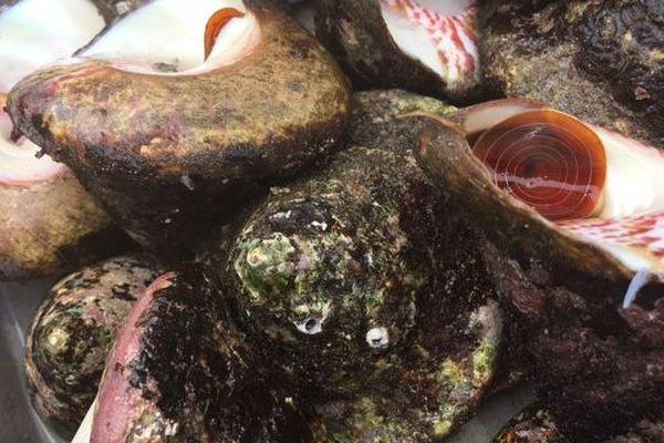 ouverture de la pêche aux trocas