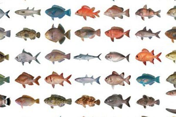 Tous les poissons dans votre mobile