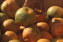 Mandarine de Canala: une fête goûteuse à souhait