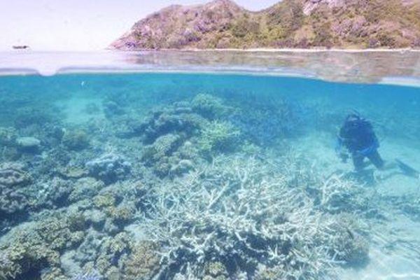 Blanchissement du corail