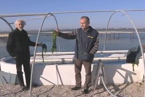 Aquaculture et poisson végétarien