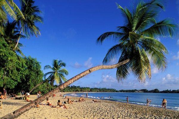 La plage Grand anse des Salines est le site le plus photographié de Martinique.