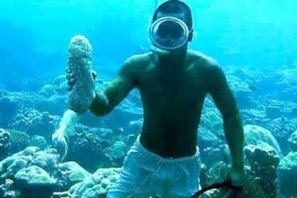Beche de mer Fidji