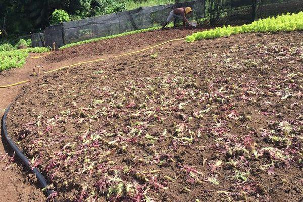 agriculture endommagée intempéries