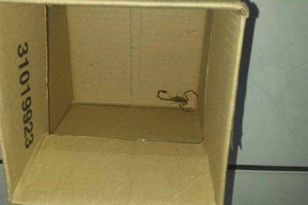 Scorpion découvert