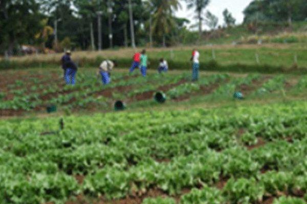 Apprentissage agricole
