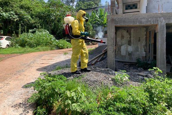 démoustication dengue