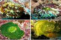 A la poursuite du corail vert de l'archipel des Gambier