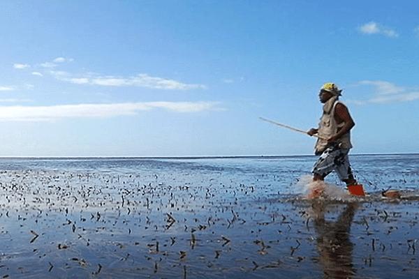 Pêcheur à Poindimié