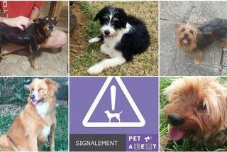 """La page Facebook """"Pet Alert Réunion 974"""" aide à retrouver les animaux perdus."""