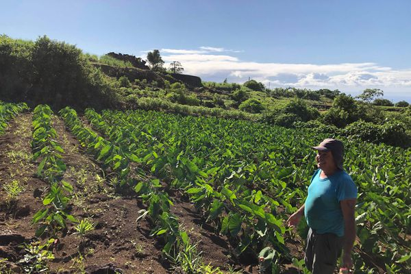 Christophe, agriculteur à Petite-Ile.