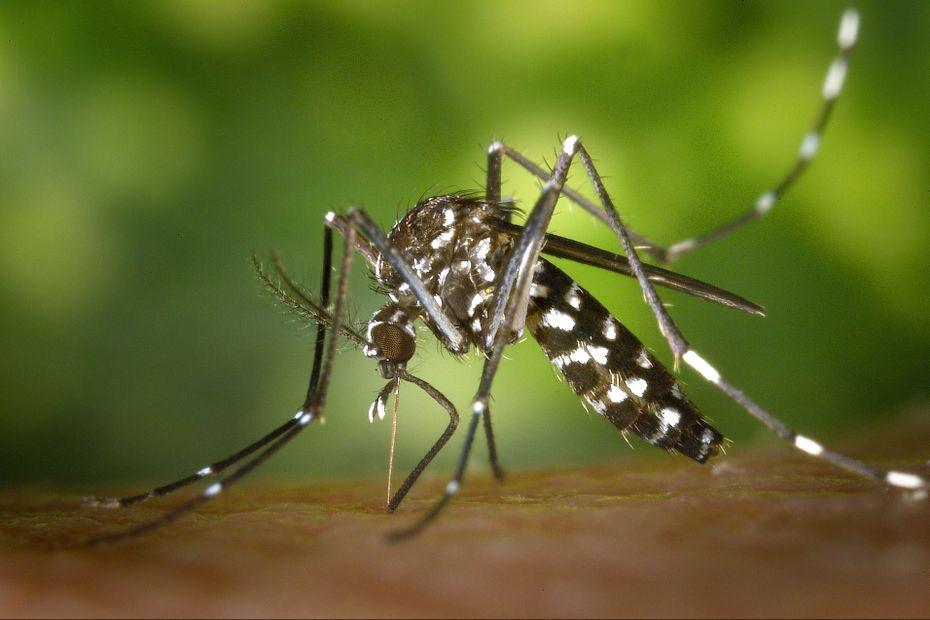 Une patiente de 75 ans qui a contracté le virus de la dengue lors de son séjour à Saint-Martin est décédée à Paris - Guadeloupe la 1ère