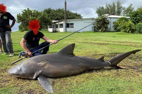 Un requin bouledogue pêché à Champ Borne