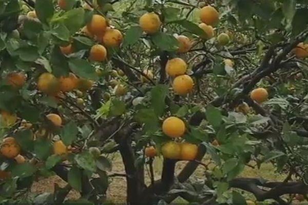 20140415 fruits