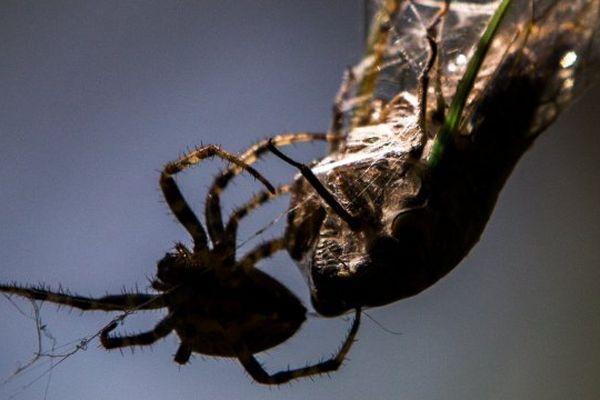 Araignée venin AVC