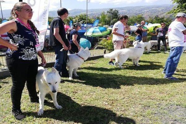 exposition canine Saint-Paul