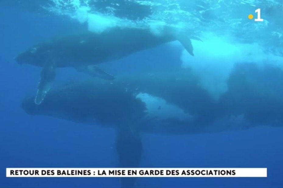 Baleines : gardez vos distances - Polynésie la 1ère