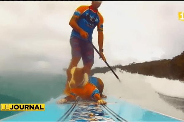 Des chiens surfeurs de vagues en Australie