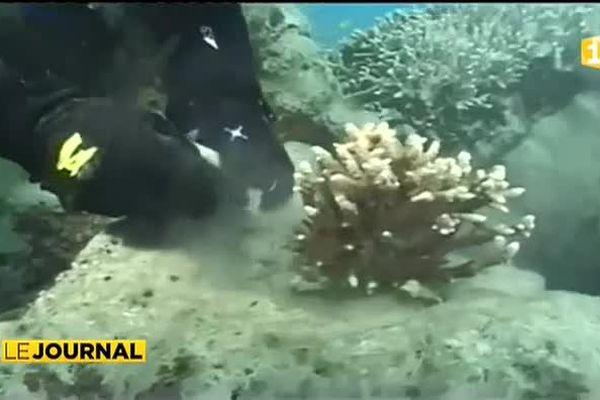 La biodiversité marine en danger