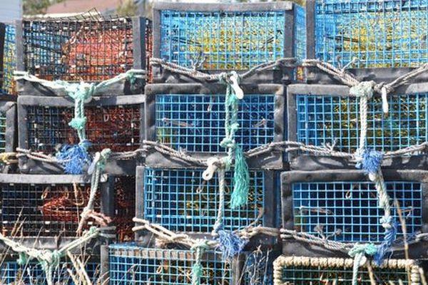 Casiers à homard dans le port de Wedgeport