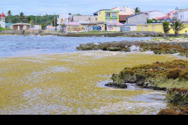 Port-Louis sargasses