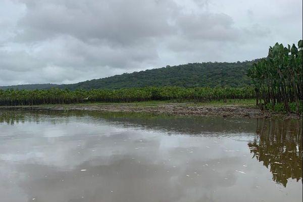 Paysage de la commune de Régina-Kaw