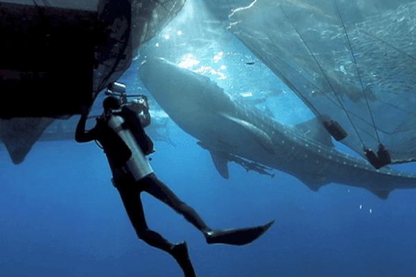 festival images sous marine