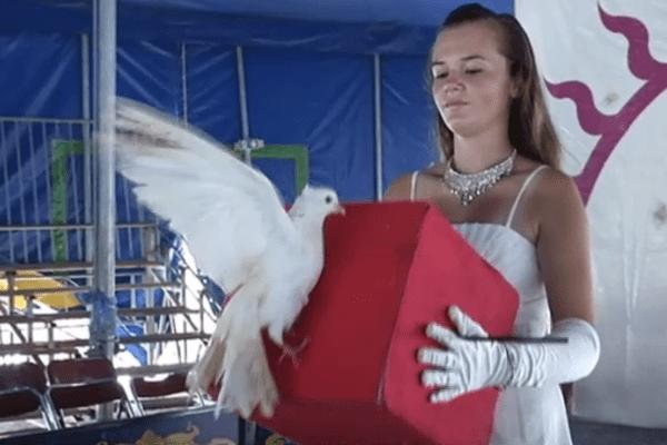Leîla dresseuse de colombes
