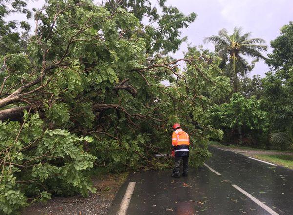 Arbre tombé cyclone Cook Poindimié (10 avril 2017)