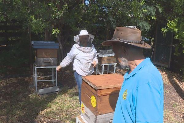les ruches de la ville du Port
