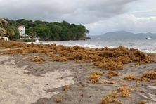 Le phénomène de houle et la présence d'algues sargasses ont pu être observés sur la plage du bourg de Schoelcher.