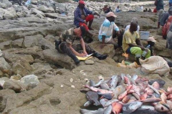 Pêcheurs illégaux Glorieuses