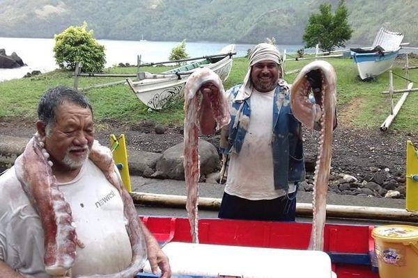 """Ils ramènent des tentacules de """"calamar géant"""""""