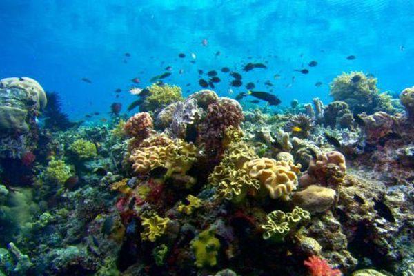 Tara dans le pacifique : sensibilisation corail