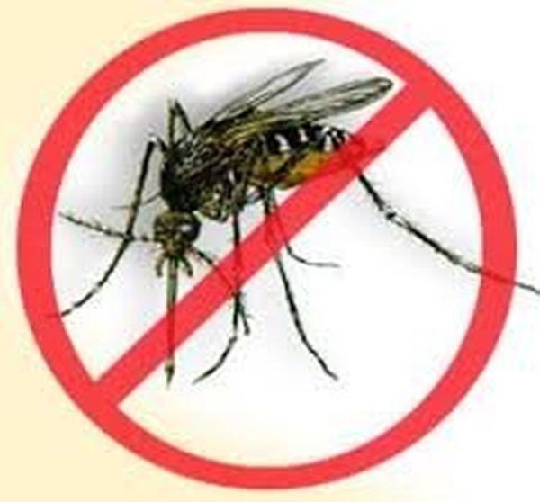les pouvoirs publics envisagent de relancer les campagnes de lutte contre les moustiques