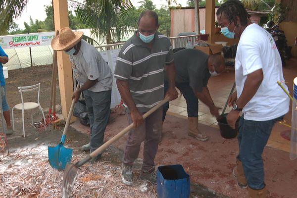 L'exemple d'une exploitation sans pesticide à Basse-Pointe