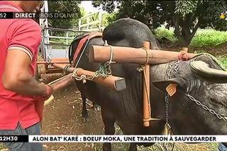 Alon bat karé : une balade en charrette boeuf moka