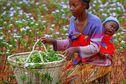 Madagascar-Covid : les plus démunis ont recours à la pharmacopée traditionnelle